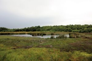 Eston Moor_wetland_to N_2010-08
